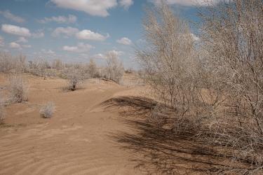 Verso l'Aral perduto