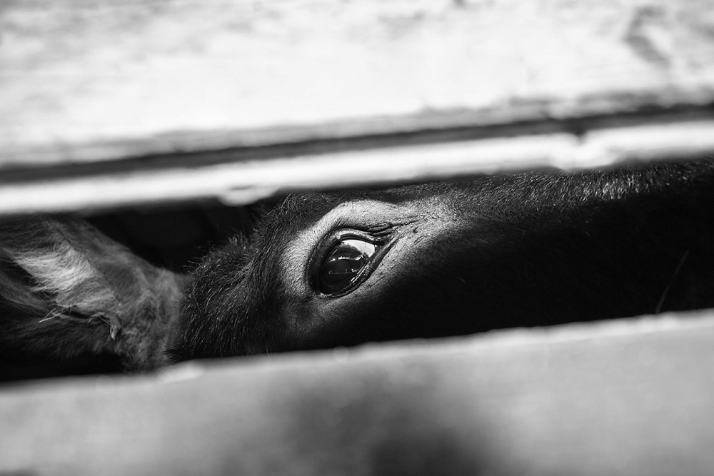 © Gianfranco Ferraro - gianfrancoferraro.it